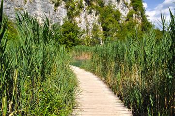 Wooden walkway through high reed