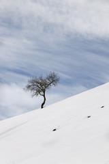 Arbol en la nieve