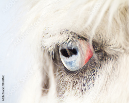Eye of A Blue Eyed Llama Close Up