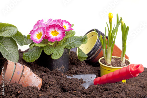 Gartenarbeit - Blumen pflanzen