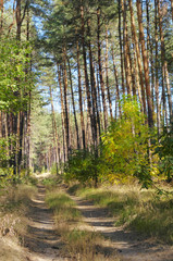 Road forest
