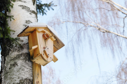 Starling house on a birch