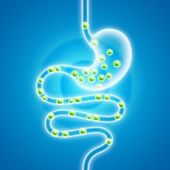 Verdauung in Magen-Darm-Trakt
