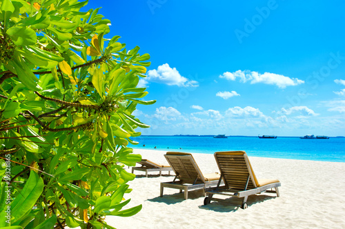 blue sky and green plants on tropical beach