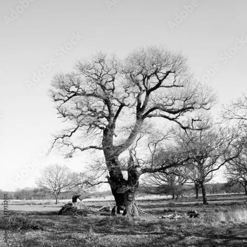czarno-biale-drzewo