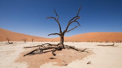 Sossusvlei, Namib desert - Deadvlei / Death valey, Namibia