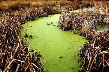 River Bog Weed