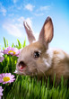 easter Baby rabbit on green grass