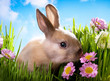 easter Baby rabbit on green grass with spring flowers