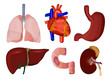 set of inner body parts medical illustration