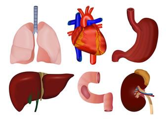 set of inner body parts medical illustration