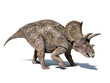 Triceratops dinosaur, isolated on white background, with clippin - 39341099