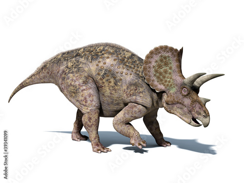 Triceratops dinosaur, isolated on white background, with clippin