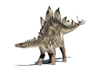 Stegosaurus dinosaur. Isolated on white, with clipping path.