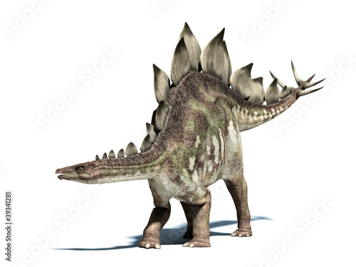 Stegosaurus dinosaur. Isolated on white, with clipping path. - 39341281