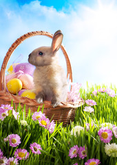 Easter basket with decorated eggs and the Easter bunny in the gr
