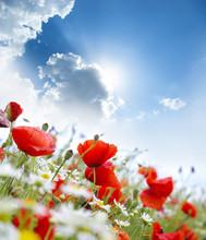 "Постер, картина, фотообои ""Poppy flower"""