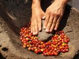 Fototapety Grinding coffee berries in hand mortar