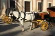 fiaker with white horse