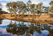 Leinwandbild Motiv river gum trees reflecting in river