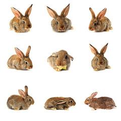 Cute Rabbit Set