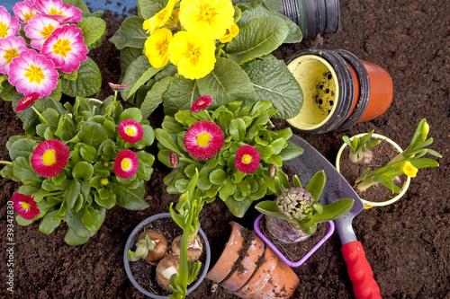 Gartenarbeit - Frühlingsblumen einpflanzen
