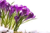 art Beautiful Spring Flowers