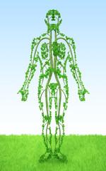 Human - tree