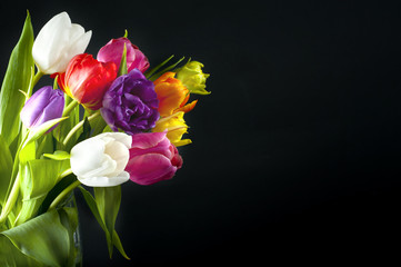 Colorful tulips isolated on black