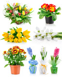 set spring flowers with green leaves isolated on white