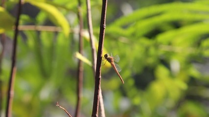 Dragonfly with green background