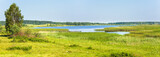Summer rushy lake panorama