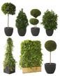 7-teiliges Set mit dekorativen Dekopflanzen auf weiß isoliert