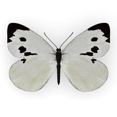 3d render of pieris brassicae