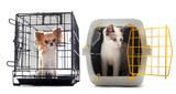 chihuahua and cat in kennel poster
