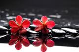 Fototapeta aromaterapia - uroda - Kwiat