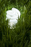 Lit Energy Savings Light Bulb in Grass