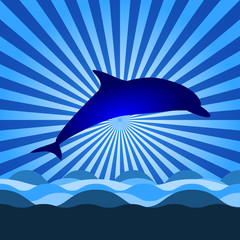 shine with dolphin