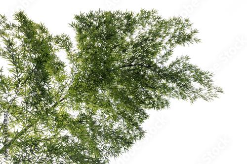 Foto Spatwand Bamboe a bamboo tree