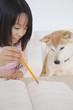勉強をする女の子と見守る柴犬