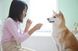 柴犬と歯磨きをする女の子