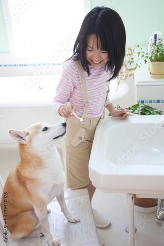 柴犬に歯ブラシを渡す女の子