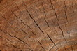 The texture of wood cut across