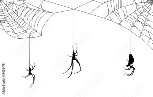 web with three spiders - 39424479
