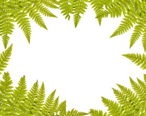 green fern frame isolated on white