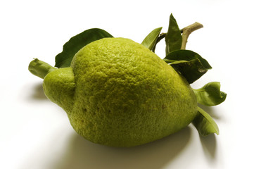 Citrus medica - 5