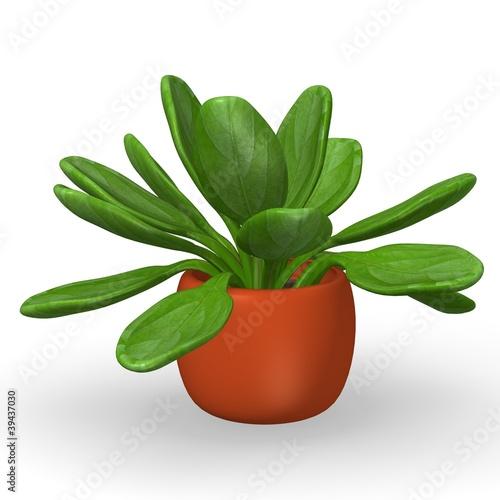 3d render of kalanchoe thyrisflora
