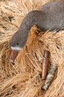goose decoy with stuffed and calls