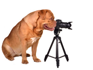 Photographer dog with photo camera