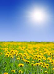 Summer landscape with dandelions
